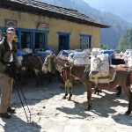 Buzz, tu poses avec les mules stp ?! ;)