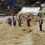 Baktapur, le temps des récoltes... (photo spécialement prise pour Maman et Papa...)